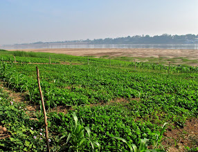 Photo: farming along the Mekong River in Si Chiang Mai, Nong Khai