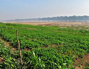 Photo: farming along the Mekong River in Si Chiang Mai, Nong Khai