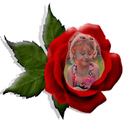 Red Rose Photo Montage
