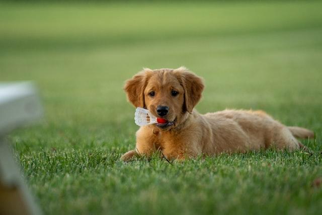 Bespaar nu 10% op jouw volgende aankoop met de PetsOnline Kortingscode.