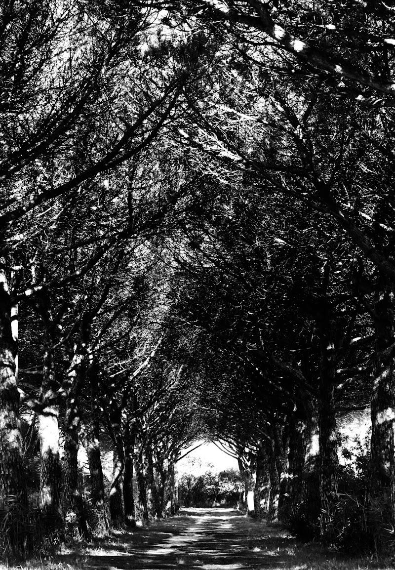 Sentieri battuti... di nicolamelottophotography