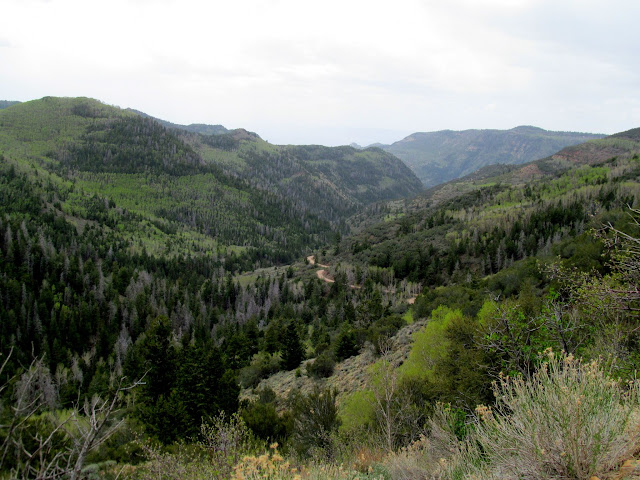 View from Bruin Point into Water Canyon