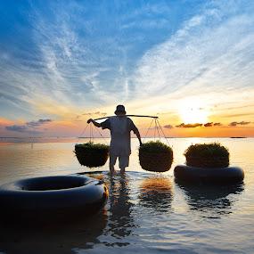 Seaweed Farmer by Wisnu Taranninggrat - News & Events World Events