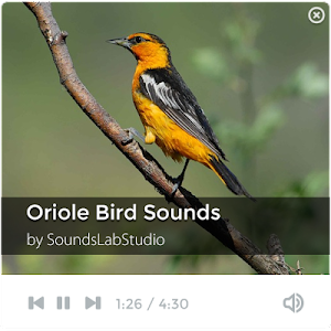 Oriole Bird Sounds screenshot 0
