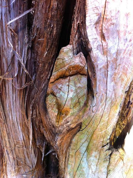 Photo: tree bark