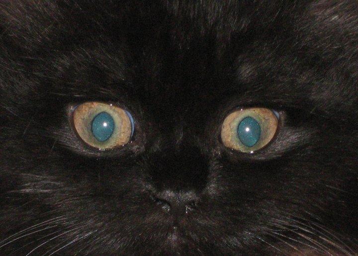 occhi di gatto di Englyn