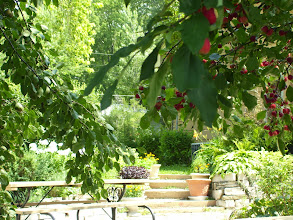 Photo: patio area