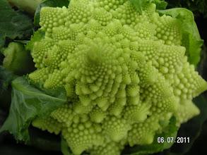 Photo: Romanesco - erste Ernte