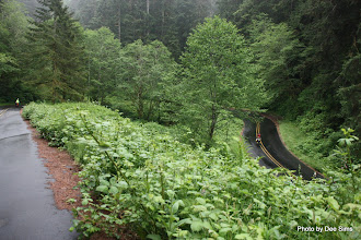 Photo: (Year 2) Day 349 - Hairpin on the Way Down (Maurice and Rog Both in View)