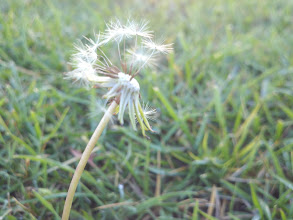 Photo: The wind made a wish.