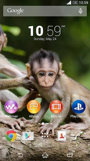 Monkeys Theme