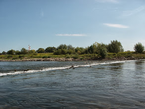 Photo: Dunajec na obrzeżach Tarnowa