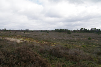 Photo: op de grote stille heide