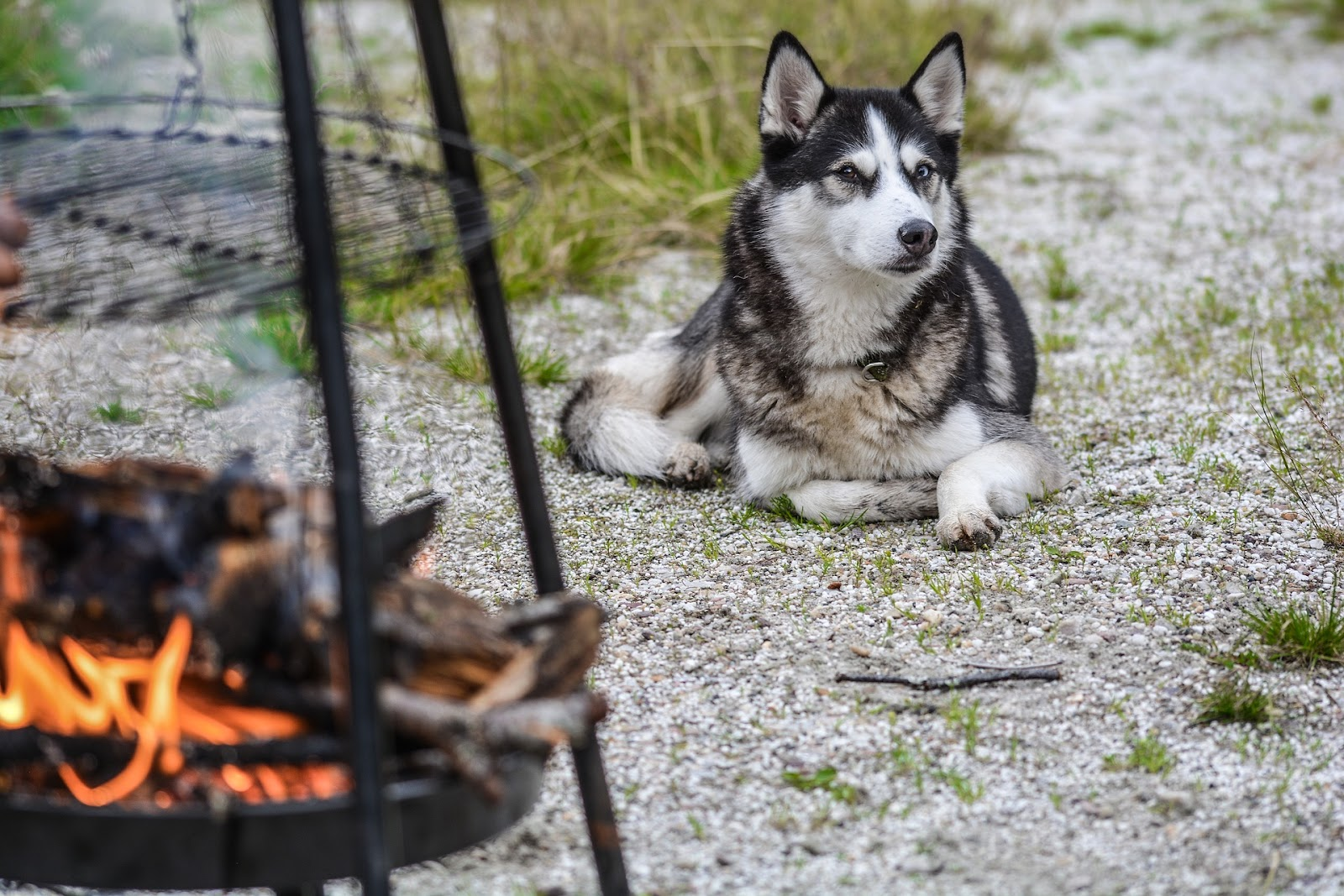 dog laying on the ground near a barbecue firepit