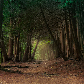 Walk in Woods by Maggie B - Landscapes Forests ( nature, trees, woodland, forest, landscape, walk, light )