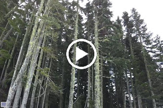 Video: Cascades Pass Trail