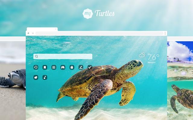 My Turtles Cute Turtle Hd Wallpapers