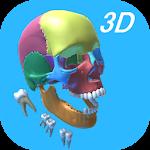Dental Anatomy & Skull 1.0