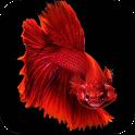 Betta Fish Wallpapers 4K icon