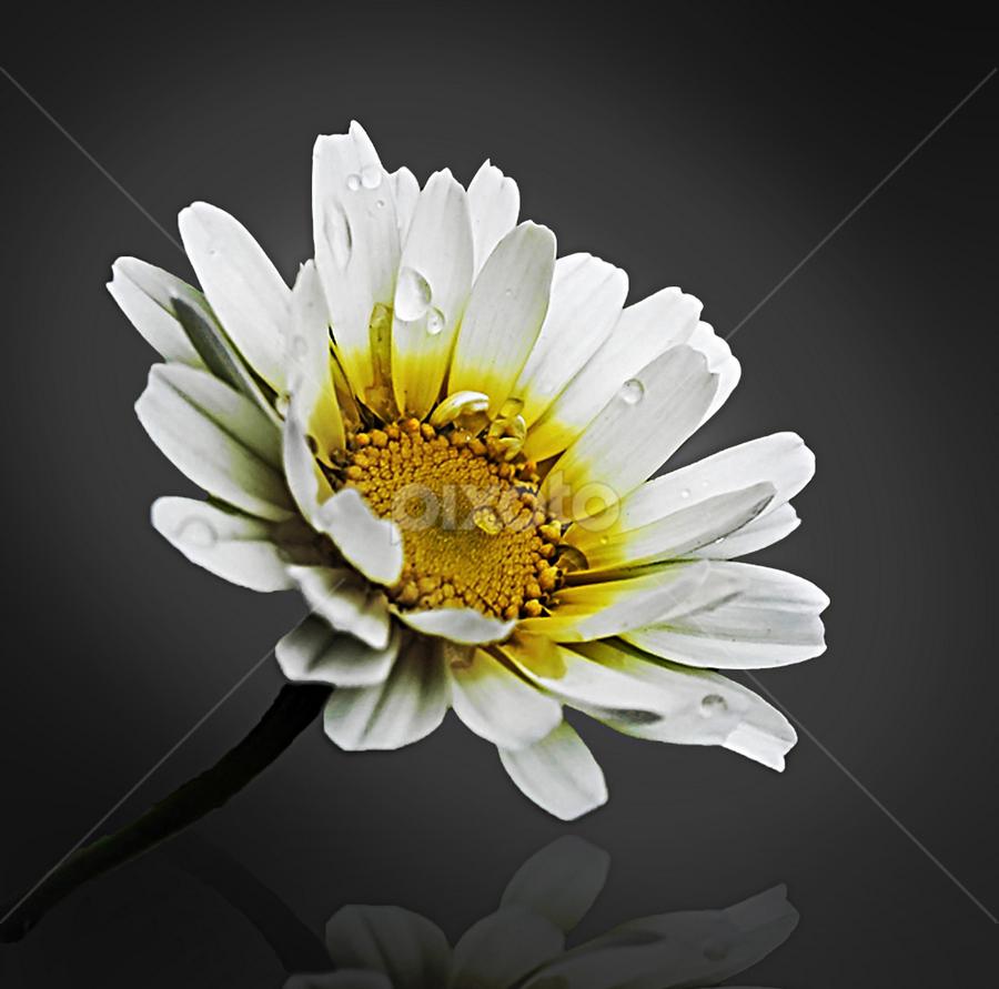 by Anshul Tiwari - Nature Up Close Flowers - 2011-2013