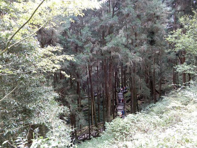 森の中を縫うように進む通路