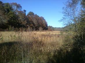 Photo: Cranberry bog behind my childhood home, taken 11/6/11