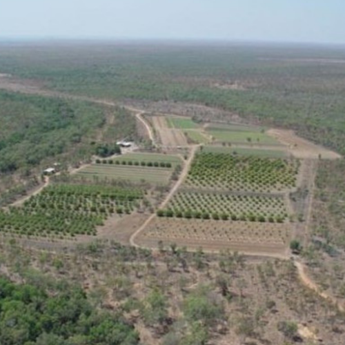 Vendor Finance Tropical Horticulture Northern Territory 350 hectares