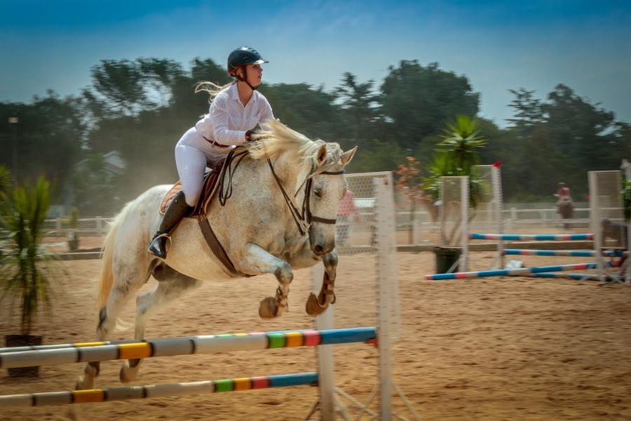 by Andre Oelofse - Sports & Fitness Other Sports ( horseback, rider, jumping, horse, show jumping, equestrian )