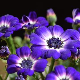 purple garden flower by LADOCKi Elvira - Flowers Flower Gardens ( floral, nature, plants, garden, flower )