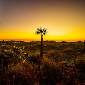 Peaceful by Donna Sparks - Landscapes Sunsets & Sunrises ( palm, sunset, gulf,  )