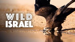 Wild Israel thumbnail