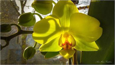 """Photo: Mi-am notat de stiut pe viitor:  1 - Planta trebuie udată săptămânal pe timpul verii  2 - Preferă nopțile mai răcoroase, cele în care temperatura din încăpere coboară în jur de 10-15 grade Celsius. 3 - Nu trebuie tinuta direct in bataia razelor soarelui  4 - În magazine găsiți fertilizanți speciali pentru orhidee  5 - Este iubitoare de aer - pentru a declanșa înflorirea orhideei se poate muta planta într-un ghiveci cu orificii laterale Desigur informatiile sunt culese de pe net :)  Floarea-mi apartine. Afland cele indicate se pare ca pana astazi am """"torturat-o """" - A reinflorit dupa aproape un an de stagnare - 2019.03.13  https://www.facebook.com/photo.php?fbid=2788325344528539&set=a.1336910659670022&type=3&theater"""