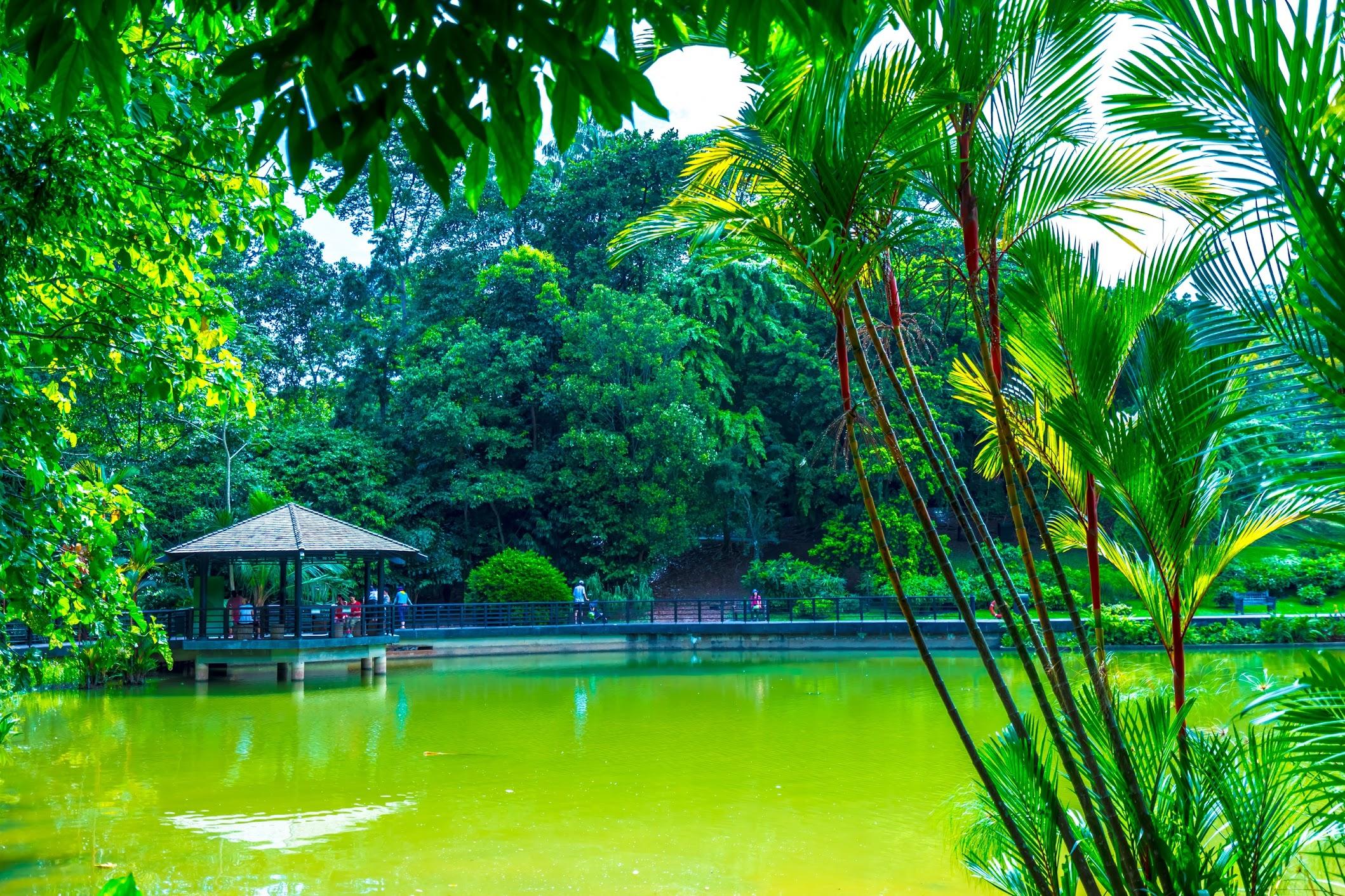 シンガポール植物園(ボタニック・ガーデン) シンフォニー・レイク1
