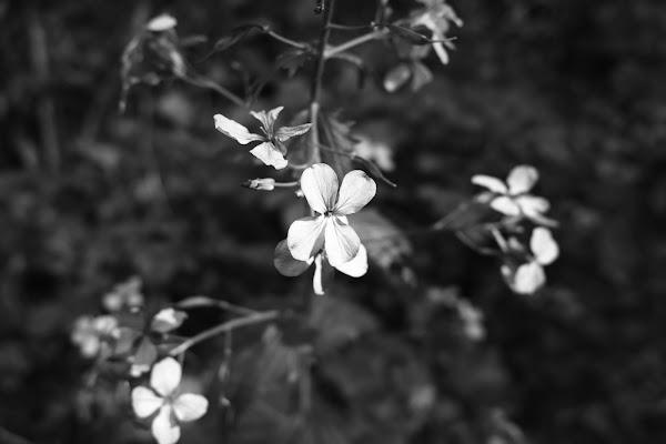 Fiorin fiorello bianco e nero è bello! di manolina