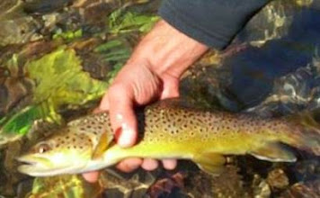 Photo: Mad River in Ohio- brown trout paradise!