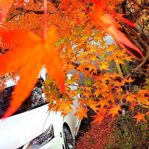 CT ZWA10 のカスタム事例画像 Hinatoさんの2020年10月19日14:38の投稿