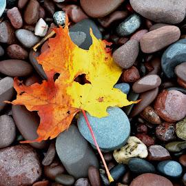 Close Up Natural Elements by Beth Bowman - Nature Up Close Rock & Stone (  )