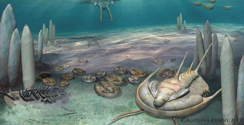 Reconstruction of the Cambrian ocean, with trilobites and early vertebrates
