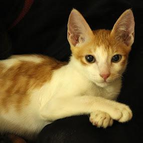 The Cat Who got High by Seema Nair - Animals - Cats Kittens ( cats, kitten, cat, pet, stray, cute,  )