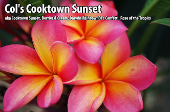 Photo: Col's Cooktown Sunset