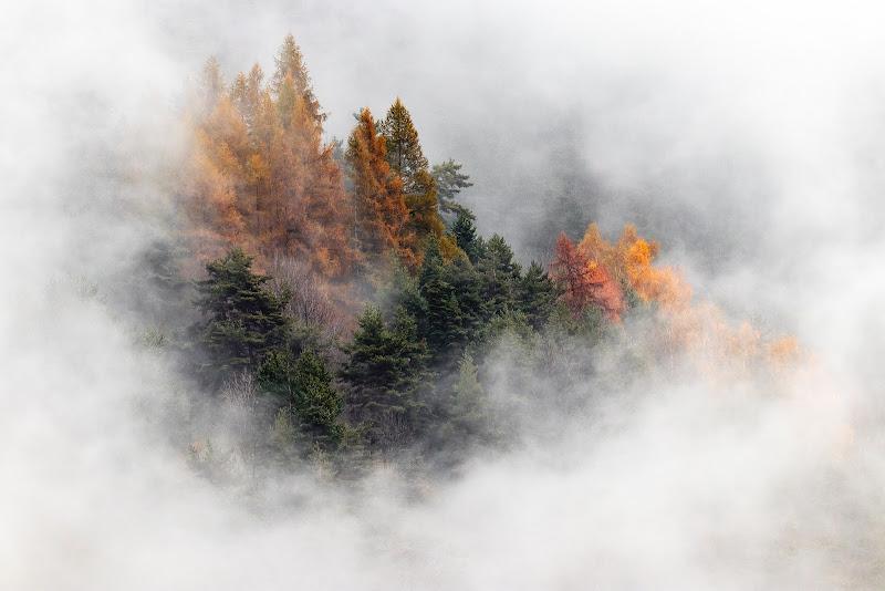 Cornice di nebbia di ste2d