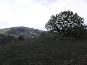 Photo: Magányos cédrus 4,2 km (háttérben a Magas-hegy / Hármas kereszt)