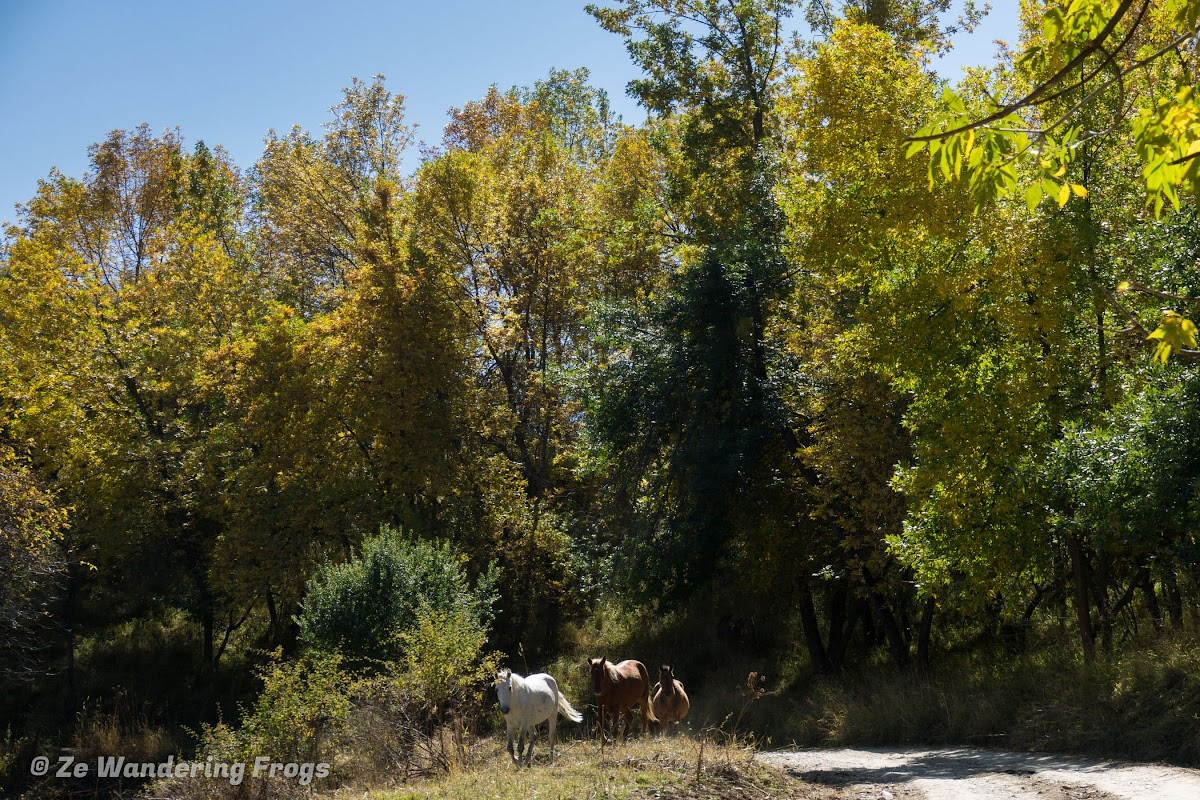 Kyrgyzstan Trekking: Guide to Sary-Chelek in the Tian Shan Mountains // Horses, Fall Colors, Blue Skye - What's not to like