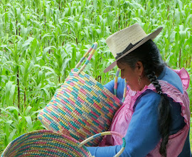 Photo: With a cornfield for background, this woman weaves baskets for export