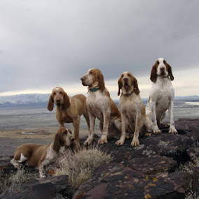 Nice Day by Ralph MInnitte - Animals - Dogs Portraits