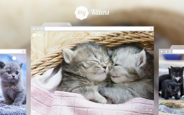 My Kittens Cute Cat Kitten Animal Wallpapers