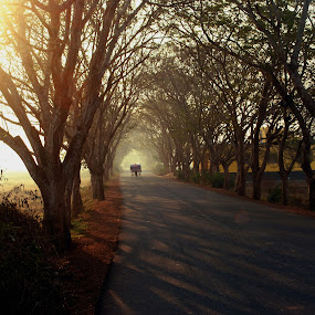 alone street by Abinash Patra - City,  Street & Park  Street Scenes ( sunrises, tree, sunsets, street, backgrounds )