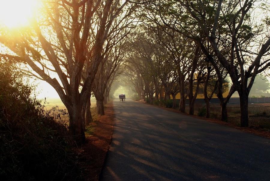 alone street by Abinash Patra - City,  Street & Park  Street Scenes ( sunrises, tree, sunsets, street, backgrounds )