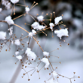 by Heather Aplin - Nature Up Close Other Natural Objects