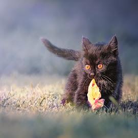 by Radek Winter - Animals - Cats Kittens